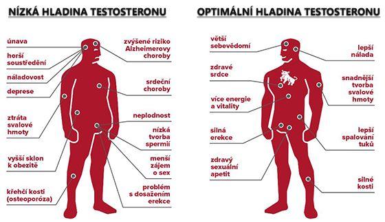 Primulus - Nízká a optimální hladina testosteronu